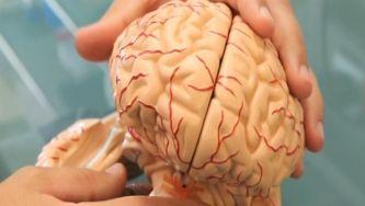 Neurociência - investigação nacional