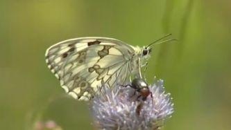 Efeito borboleta, a beleza em pleno voo