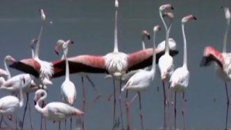 Flamingo, o cor de rosa que cruza o horizonte
