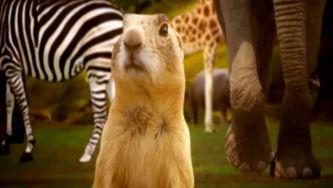 """A raiz latina da palavra """"animal"""""""