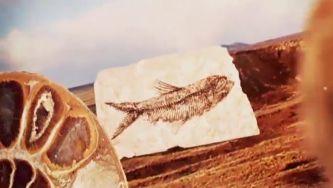 O que é um fóssil?