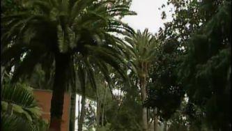 Visita às cicas do jardim tropical Monte Palace