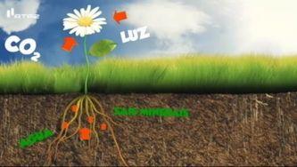 O que é a fotossíntese?