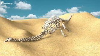 Sabes o que é um fóssil?