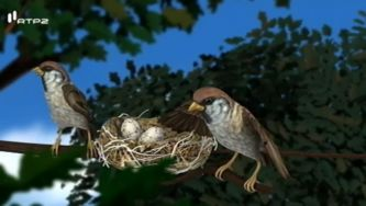 Ovíparos, animais que nascem de um ovo