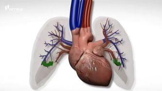 Circulação sanguínea: pulmonar e sistémica