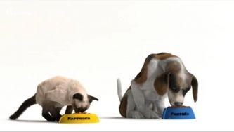 Carnívoro, herbívoro, omnívoro: o que comem estes animais?