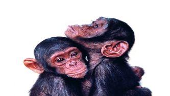 O amor é complicado, até no mundo animal
