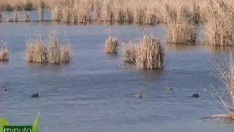 Silêncio... vamos observar pássaros na Lagoa de Albufeira