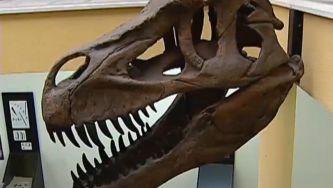 Um dinossauro carnívoro em Portugal