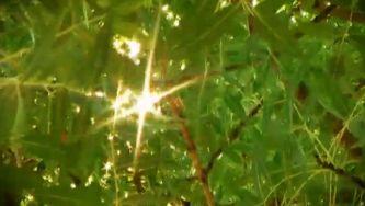 Freixo, uma árvore que povoa mitos