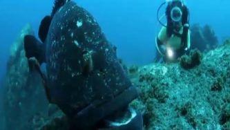 Fotografia subaquática: mergulhar nas profundezas