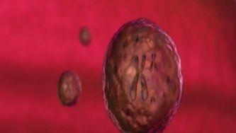 Telómeros: a fonte da juventude?