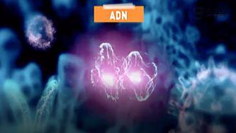 O que é o ADN?