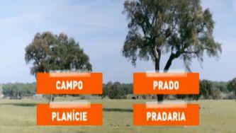 Campo, prado, planície e pradaria: não é tudo a mesma coisa