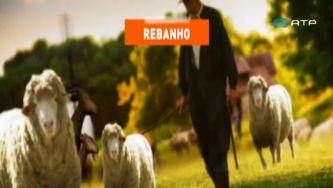 Rebanho, manada, gado e vara: cada animal no seu lugar