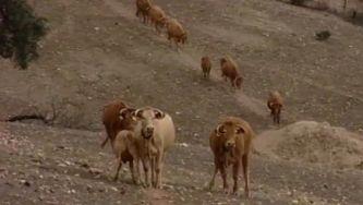 O impacto da seca na agricultura