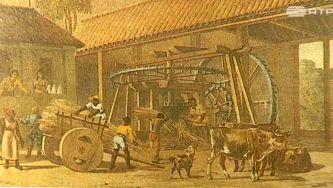 O ciclo do açúcar no Brasil