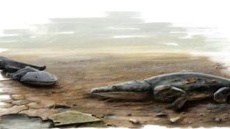 Antes dos dinossauros viveram no Algarve salamandras gigantes