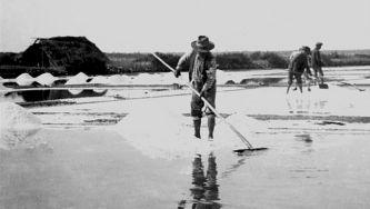 O sal do Sado: o que ficou das antigas salinas