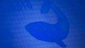 Baleia Azul, o jogo da morte nas redes sociais