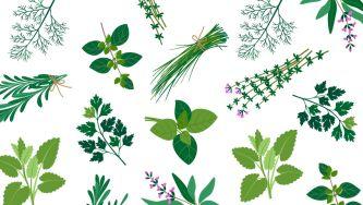 Ervas Aromáticas: menos sal, mais saúde