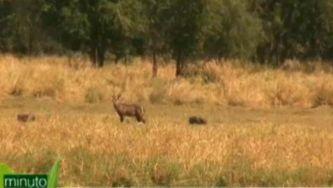A vida selvagem da Gorongosa