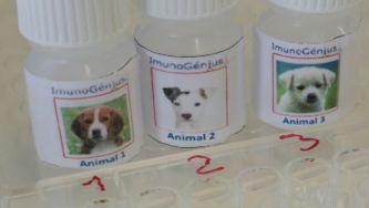 ImunoGénius, o ensino experimental da imunologia