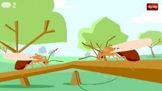 Porque é que algumas formigas têm asas?