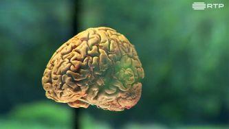 Einstein tinha um cérebro especial ou qualquer um pode ser um génio?