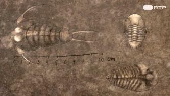 Trilobites, a vida na Terra antes dos dinossauros