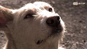 Animais de estimação: um chip contra o abandono