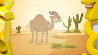 Porque é que os camelos estão sempre a ruminar?