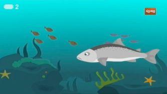 Como é que o salmão volta ao lugar onde nasceu?