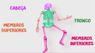 Conheces o teu esqueleto?