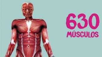 O nosso corpo: os músculos