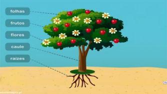 Plantas: como são constituídas
