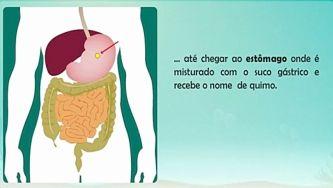 O nosso corpo: a função digestiva