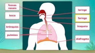 O nosso corpo: constituição do sistema respiratório