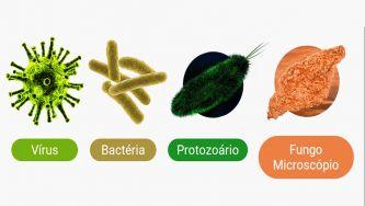 Microrganismos: micróbios patogénicos