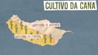 A Madeira e a viagem do açúcar  (III) </br>  O açúcar na colonização da Madeira