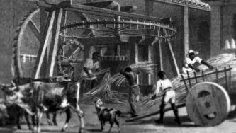 A Madeira e a viagem do Açúcar (V) </br> O açúcar e os escravos