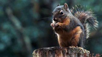 Vamos roer uma noz com este esquilo