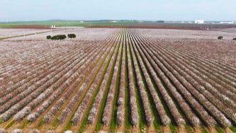 A Invasão da Agricultura Insustentável