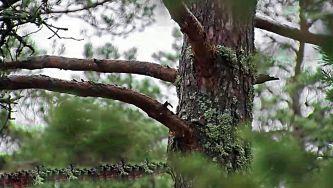 A Bioeconomia da Floresta, o exemplo sueco